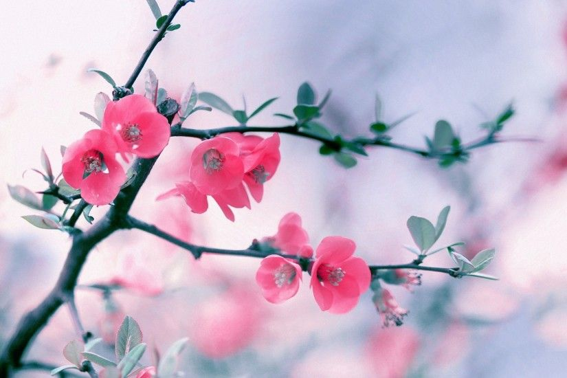 Flower-Wallpaper-Pink-Bush