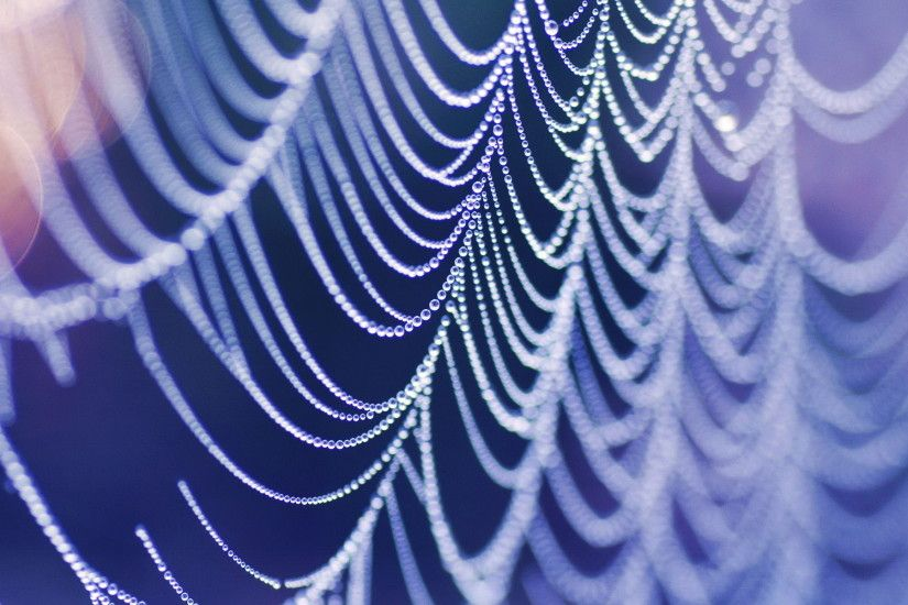 Photography - Spider Web Wallpaper