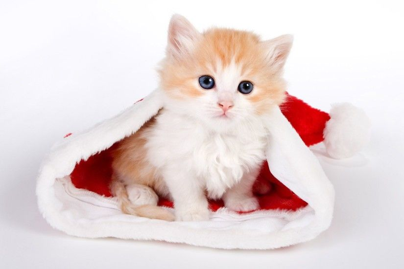 "Search Results for ""merry christmas cat wallpaper"" – Adorable Wallpapers"