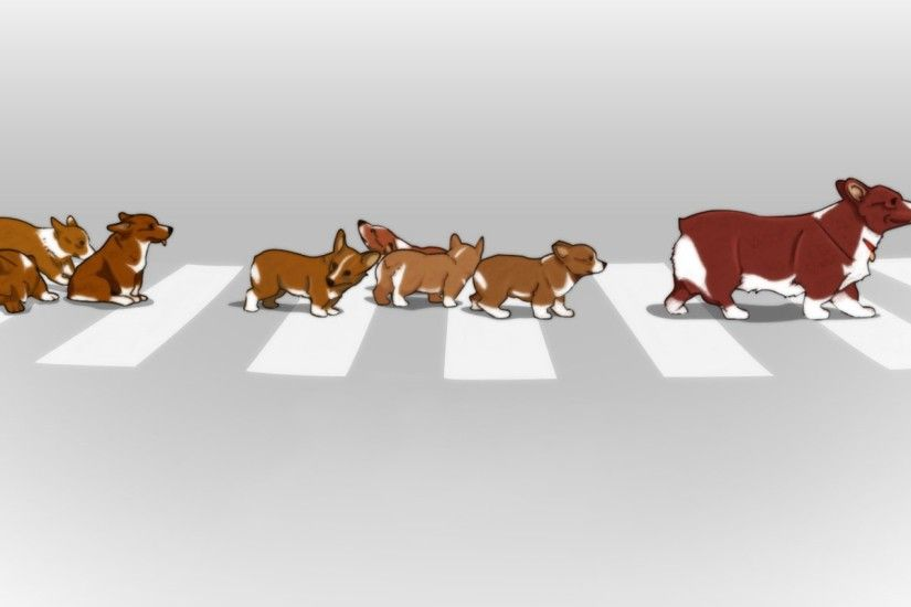 Animals Corgi Cowboy Bebop Crosswalks Dogs Ein Puppies Street