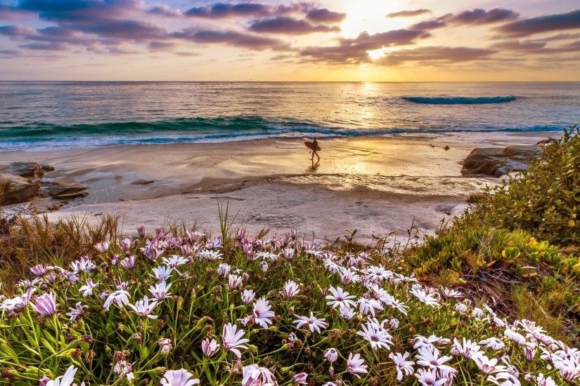 Preview wallpaper california, pacific ocean, flowers, coast, sunset  3840x2160