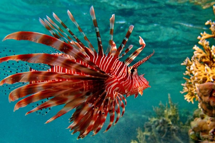 Coral Reef Fish - HD Wallpapers | Earth Blog ...