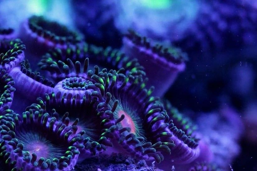 Fishes - Underwater Psychedelic Coral Sea Life Art Ocean Sealife Artwork Hd Fish  Wallpapers 1080p for