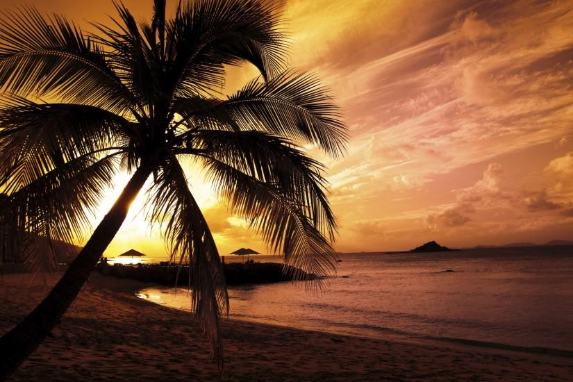 Free Download Palm Tree Backgrounds.
