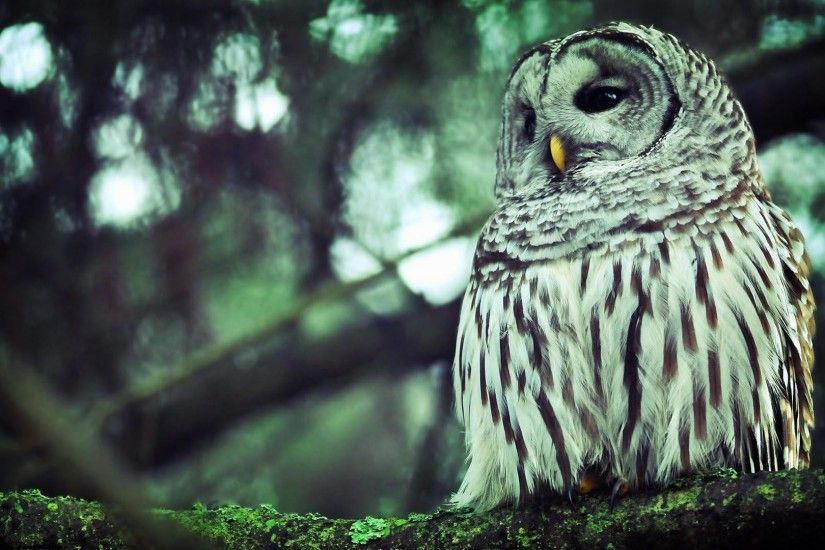 8. cute-owl-wallpapers8-600x338