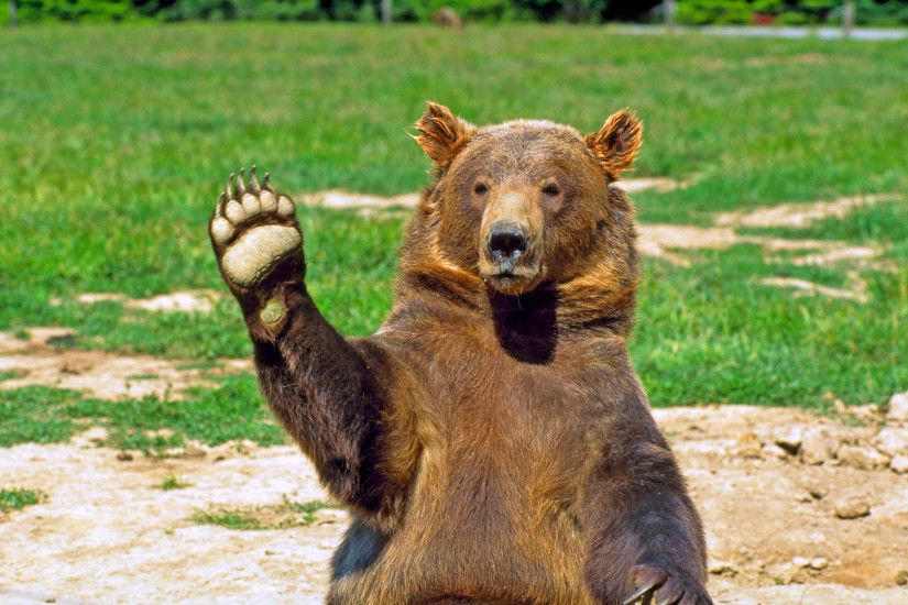 Bear Hi Five