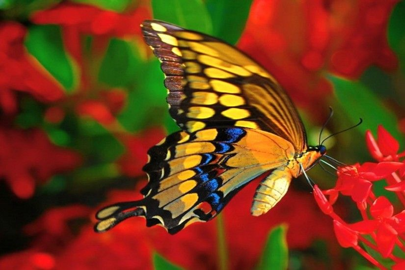 Cute butterfly on the red flowers