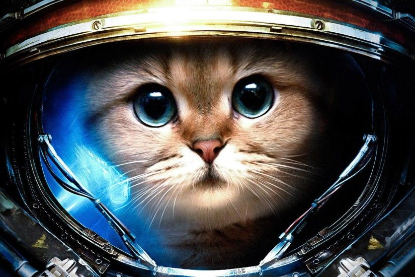 Space Cat Wallpaper For Iphone