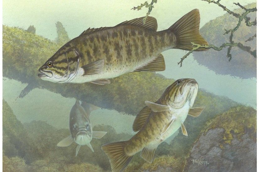 2151x1584 Wallpapers For > Bass Fishing Wallpaper Iphone