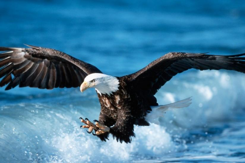 Great Wild Eagle Wallpaper HD 11 High Resolution Wallpaper Full Size