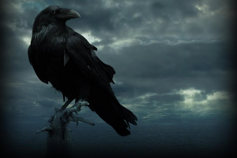 47+ HD Raven Wallpapers \u0026amp; Background Images