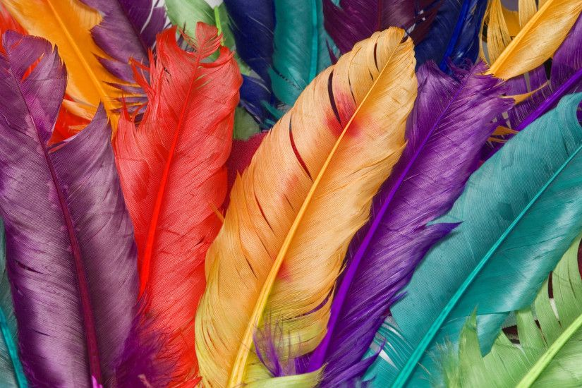 colorful images | colorful feather Wallpaper