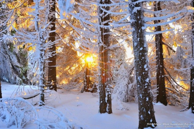 Snowy Tag - Snowy Sun Snow Winter Trees Forests Forest Shining Nature Good  Picture Ideas for