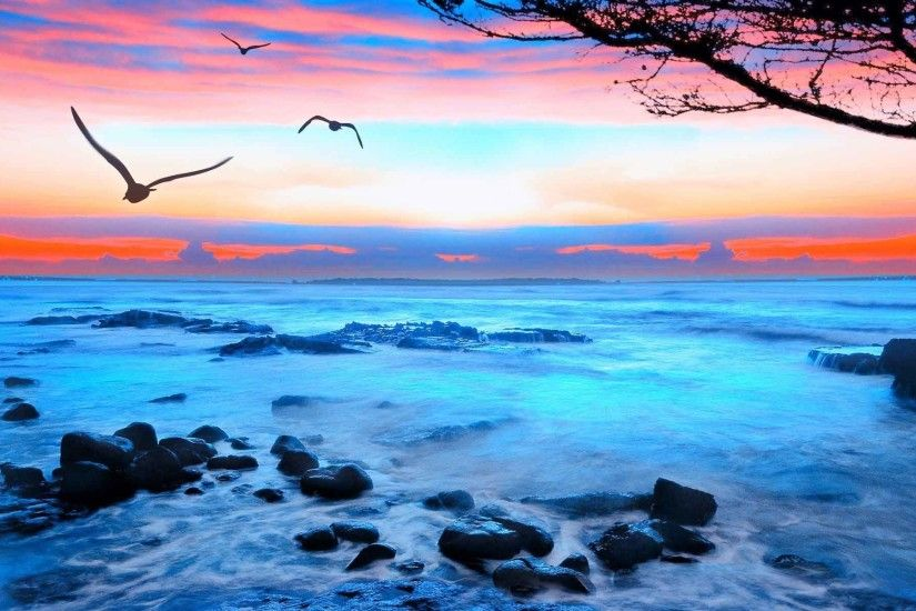 Sunrise Sunset Landscape Sea Seagulls Beautiful 3D Nature Wallpapers For  Desktop HD