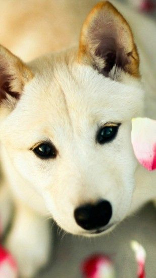 Cute Dog Pink Petals iPhone 6 Plus HD Wallpaper ...