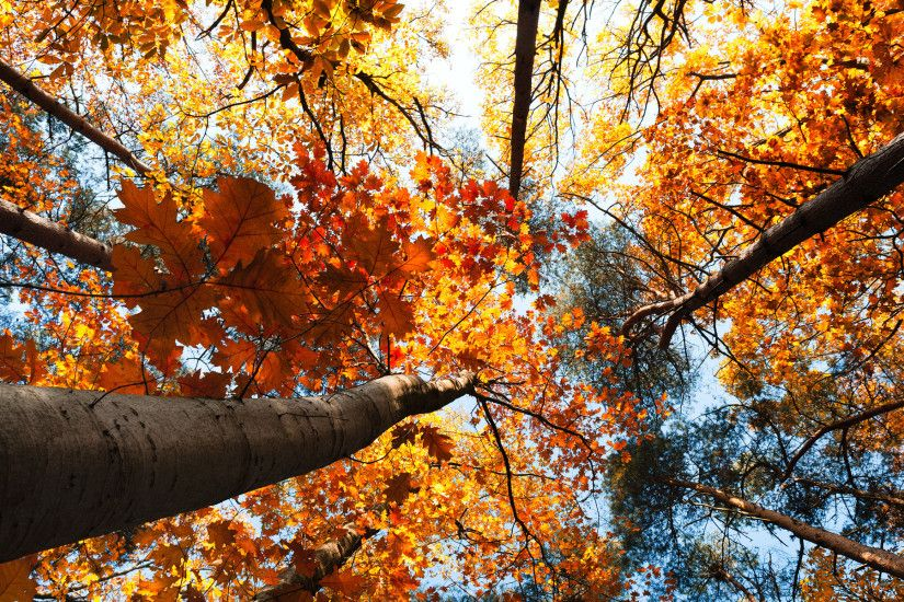 Nature trees treetops autumn fall seasons leaves sky sunlight color  wallpaper | 1920x1200 | 27596 | WallpaperUP