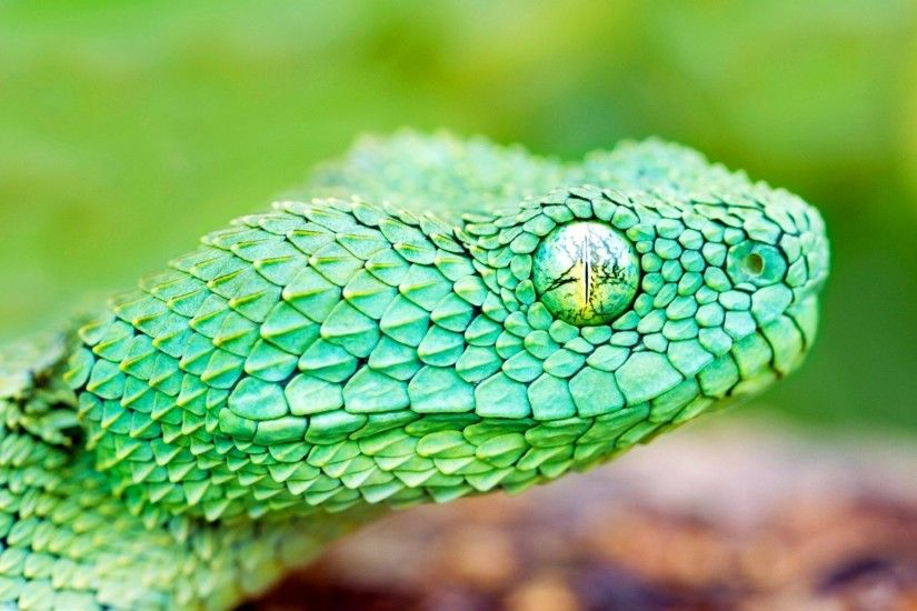 green snake wallpaper beautiful snake hd wallpapers.
