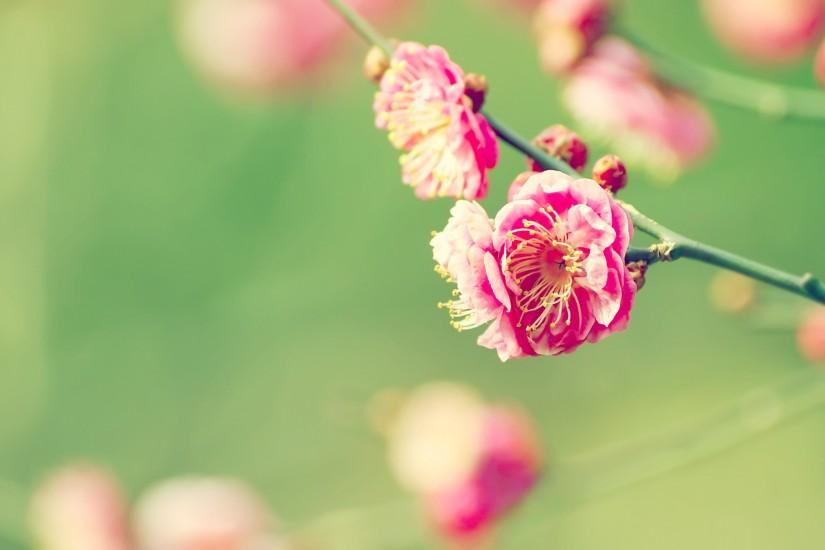 popular spring backgrounds 2560x1600 smartphone