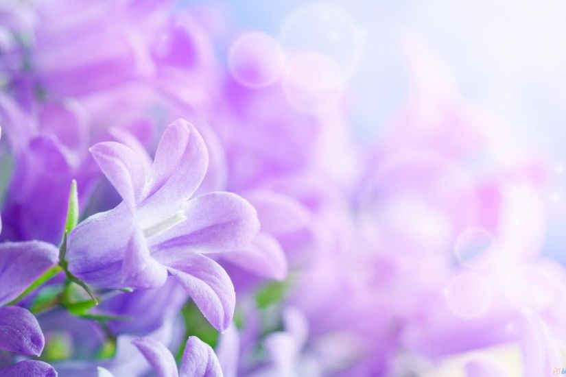 Beautiful Purple Flower Wallpaper Full HD Pictures - HD Wallpapers