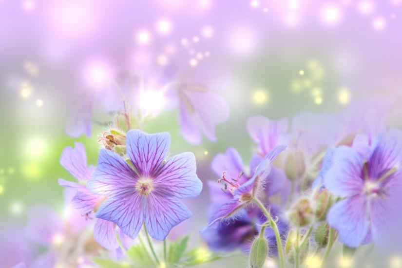 popular spring wallpaper 1920x1691 for tablet