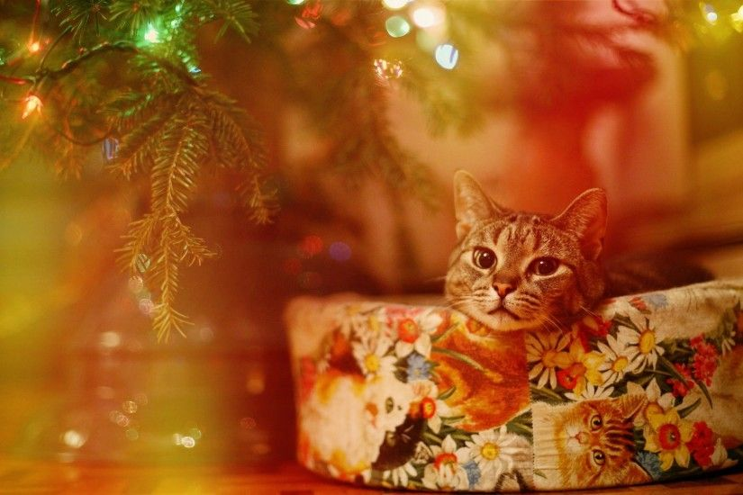 cat, Lights, Christmas Wallpapers HD / Desktop and Mobile .