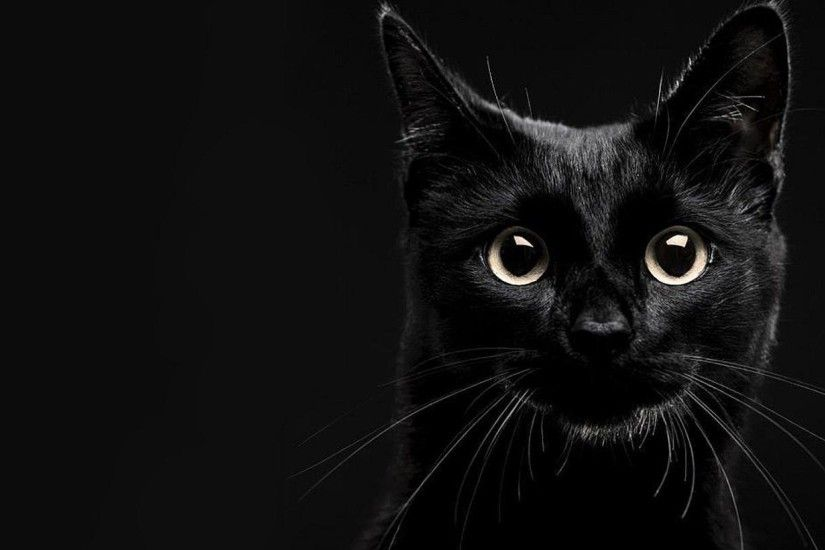 ... Black Cat Wallpapers | HD Wallpapers ...