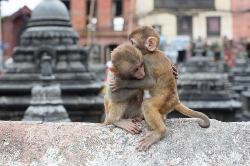 Animals Hugging Wallpaper With Monkey Baby Hugging Picture