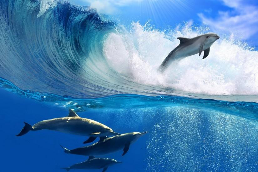 dolphin wave free wallpaper