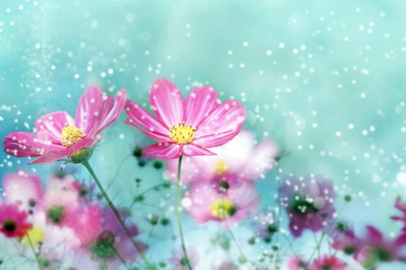 popular flower backgrounds 2560x1600