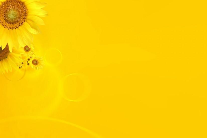sunflower background 1920x1200 for mobile hd