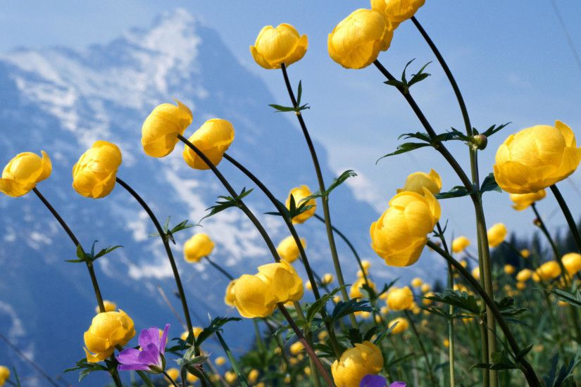 Free Wildflower Wallpapers 37098