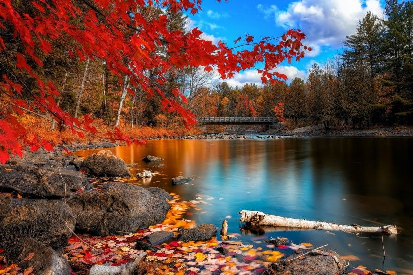 Fall Foliage Wallpapers For Desktop - Wallpaper Cave ...