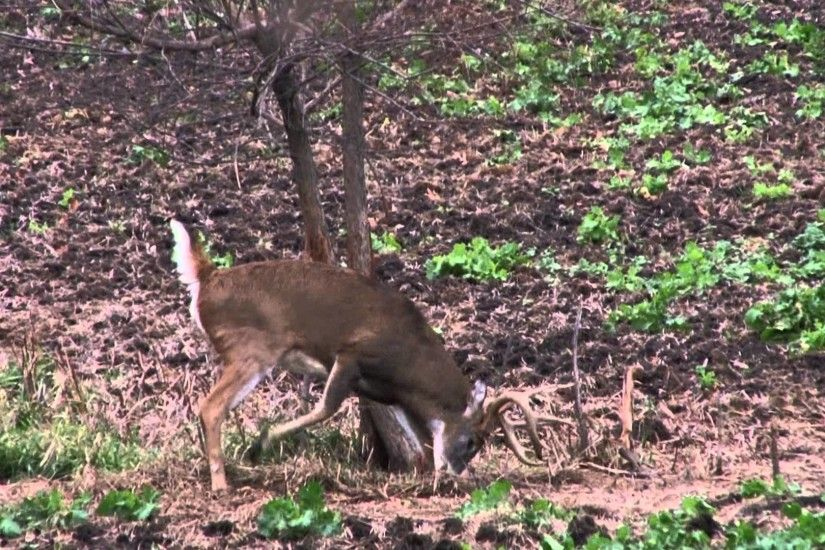 AMAZING BIG BUCK HIGHLIGHT REEL - Whitetail Properties - Fall 2013 - YouTube