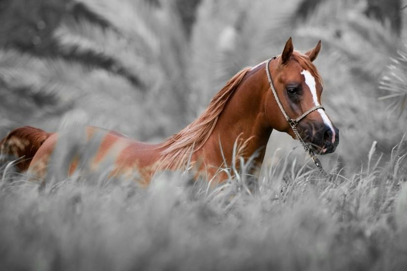 amazing horse wallpaper 2560x1440 for tablet