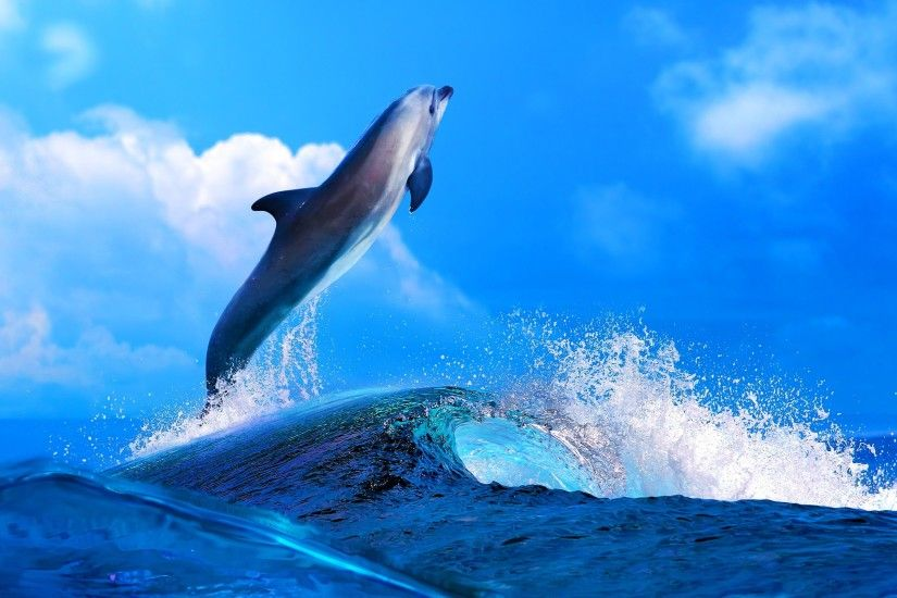 ... Dolphin HD Desktop Wallpaper Wallpapers - New HD Wallpapers