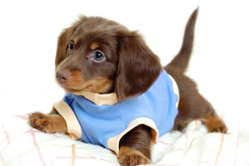 Cute Puppy Wallpaper 15447
