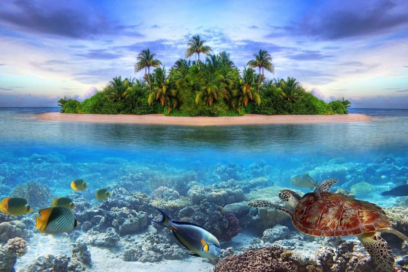 Marine Life Of Tropical Island Wallpaper
