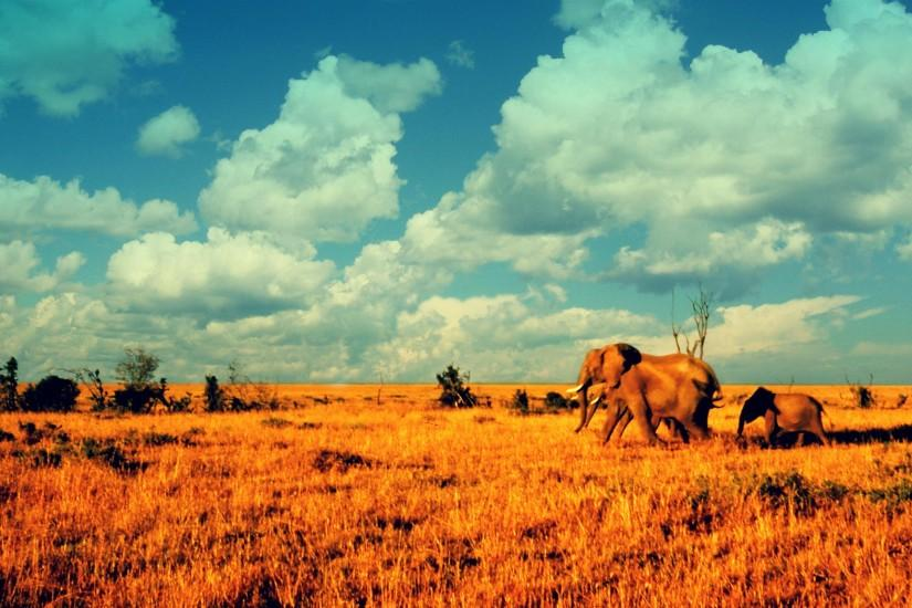 Deserts elephants African baby elephant baby animals wallpaper | 2560x1600  | 186122 | WallpaperUP