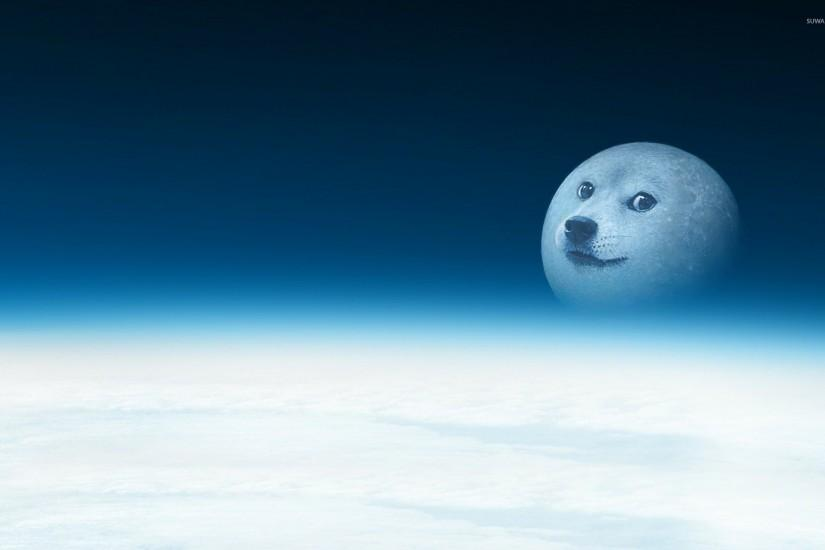 doge wallpaper 1920x1200 hd