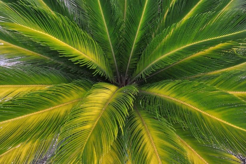 palm tree pretty picture background
