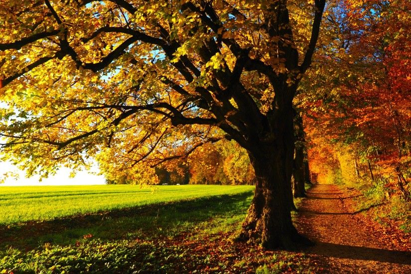 Fall-Scenery-Wallpaper-Download-Free