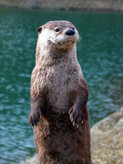 best otter photos image