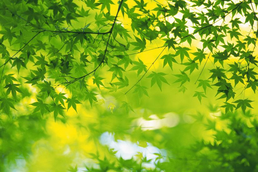 Very Beautiful fresh green leaves widescreen/HD wallpapers pack .