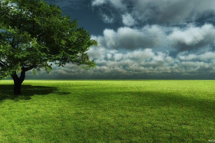 Description free download green forest hd top wallpaper green forest