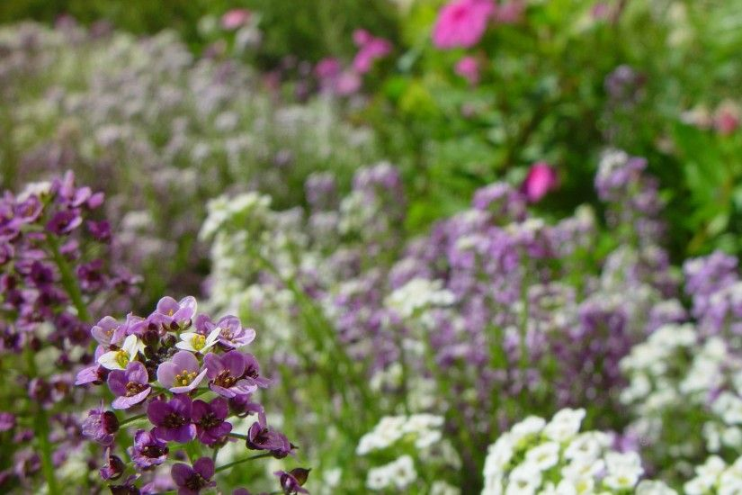 little, white, purple flowers, background