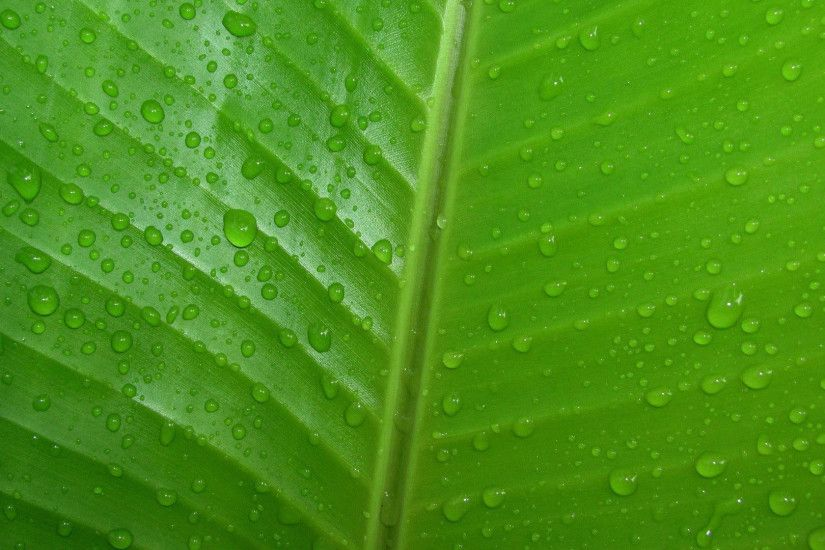 hd pics photos green leaves nature water drops desktop background wallpaper