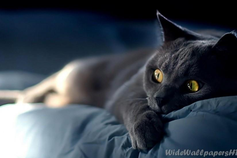 National Cat Day 1920x1080 Cool Cat HD Wallpapers and feline photos