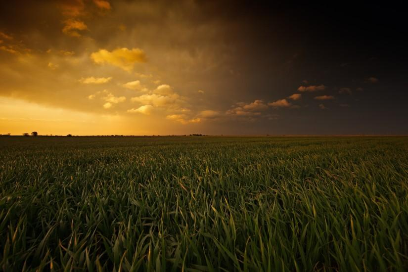 Sunset Over Corn Field 4K Ultra HD