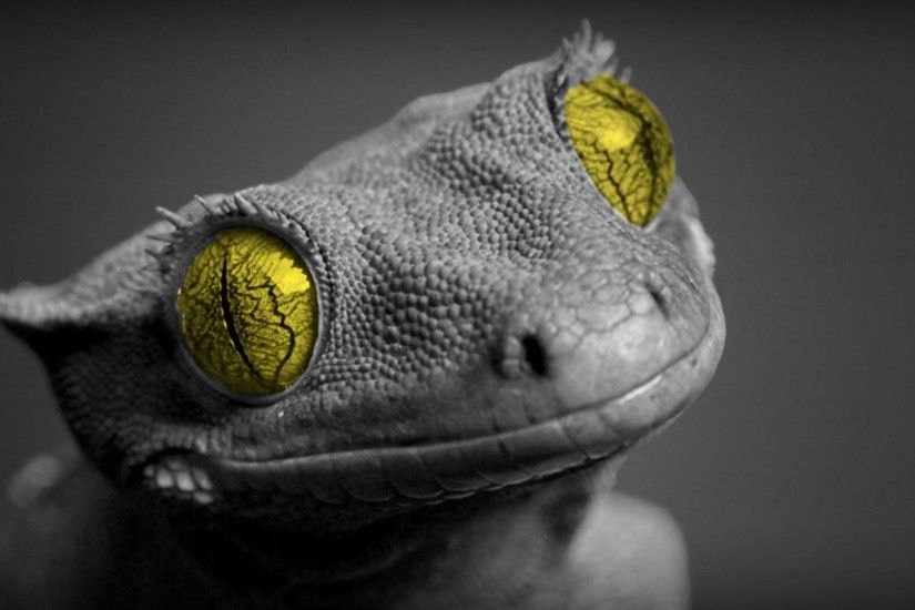wallpaper.wiki-Free-Bearded-Dragon-Picture-PIC-WPB0015428
