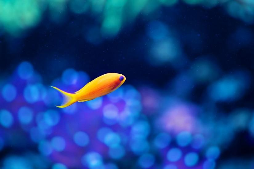 Small Yello Fish Aquarium Background